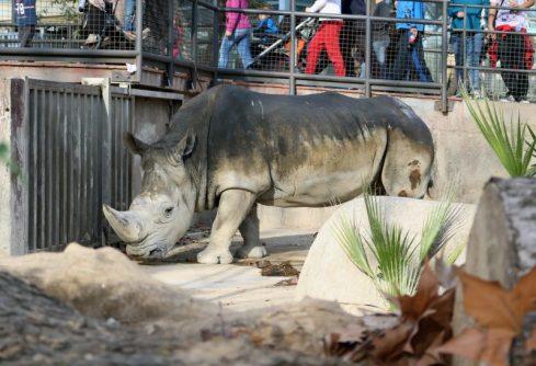 Zoo de Barcelona | María Antonieta García