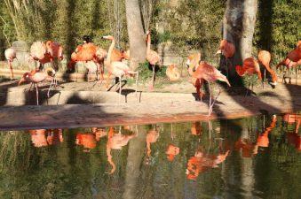 Zoo de Barcelona   María Antonieta García